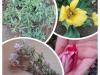 videc48dnik-dac5a1a_pomlad_kolac5be-2