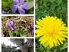 eric-mai-arnuc5a1-nerat_pomlad_kolac5be-2